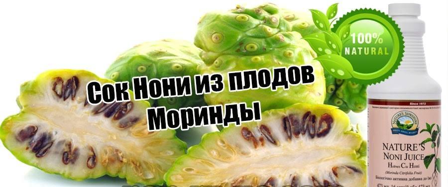 Сок Нони из плодов Моринды