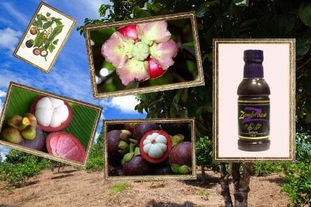 Замброза-вкусный и полезный напиток компании NSP